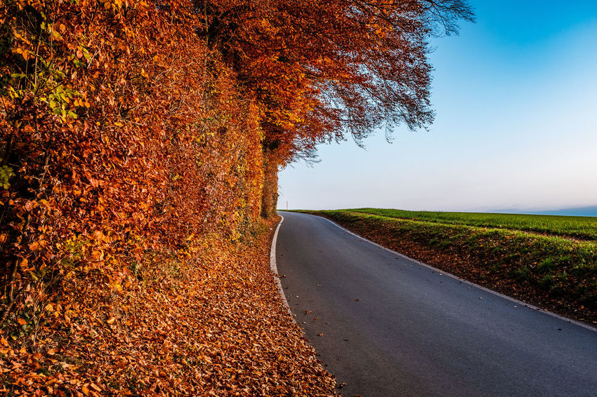 Tree Direction Plant Road The Way Forward Autumn Transportation Change Nature Beauty In Nature Tranquility Sky Day Leaf No People Tranquil Scene Growth Landscape Plant Part Outdoors Diminishing Perspective Treelined