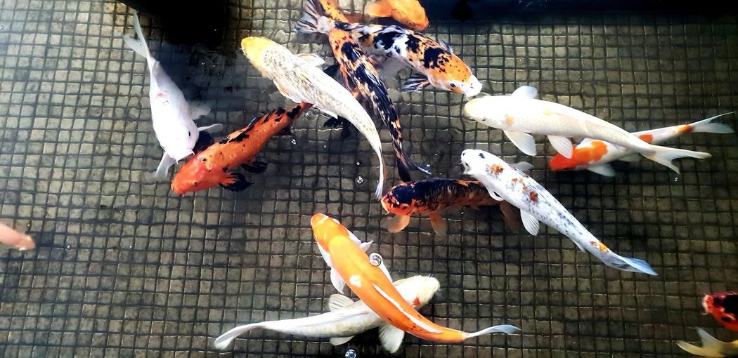 Sea Life Fish High Angle View Animals In Captivity