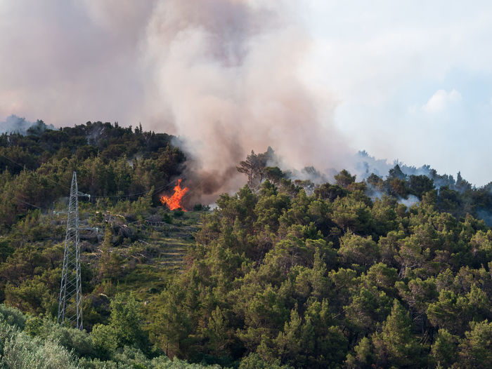 Open fire in pine tree forest Burn Burning Burning Croatia Danger Day Destruction Electric Lines Fire FireFighting  Flame Forest Forest Fire Growth Landscape Nature No People Nobody Outdoors Pine Tree Smoke - Physical Structure Summer Tree