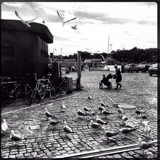 #kauppatori #street #helsinki #trolley #seagulls Street Seagulls Trolley Helsinki Jj_forum_0516 Kauppatori