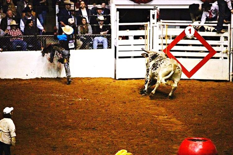 Rodeo Stockshow & Rodeo COWBOYS ❤ this IS my first Rodeo ❤ Fort Worth Bulls Tadaa Community