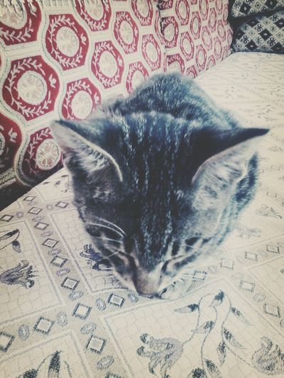 my cat <3 his name is Paşa :D