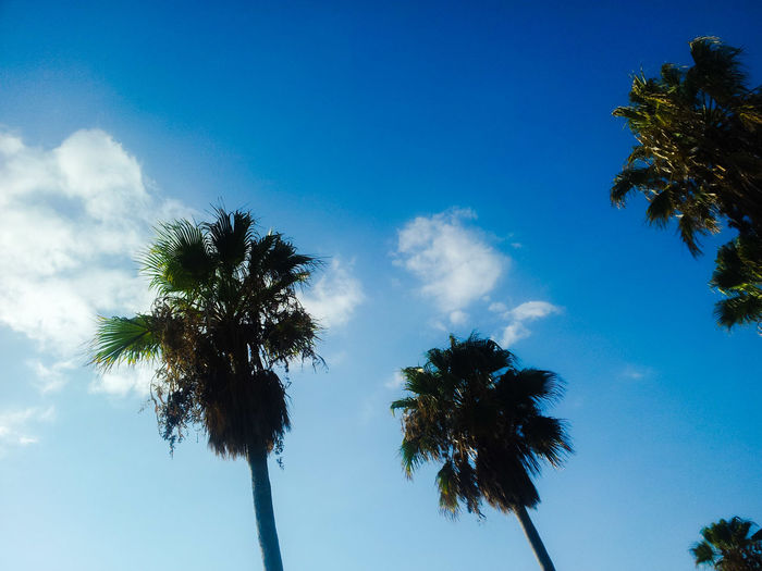 Blue Wave Palm Trees Blue Sky Sunshine Wolkenfetzen Blauer Himmel Palmen