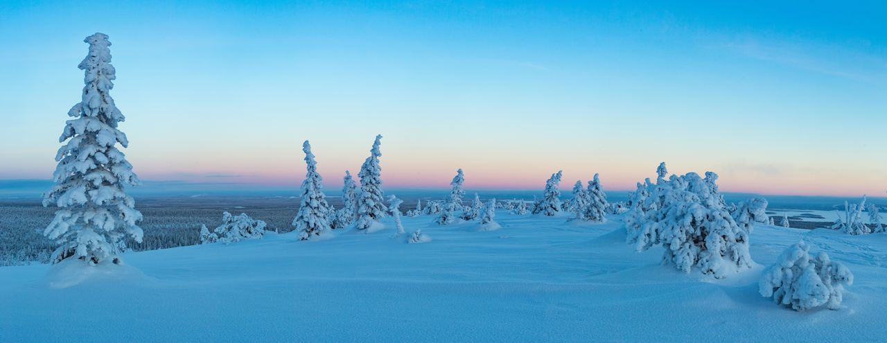 Panorama Frozen Forest Frozen Nature Pink Color Winter Polar Circle Finland Lapland Forest Tunturi