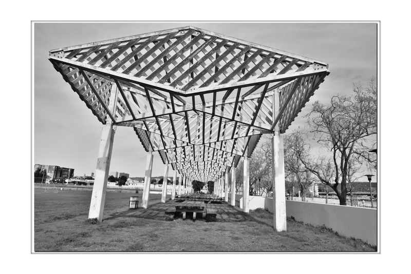 Picnic Concourse @ Estuary Park 4 Oakland/Alameda Estuary Waterfront Shore Jack London Square San Francisco Bay Trail Adjacent To Athletic Field & Aquactic Center Monochrome Photograhy Monochrome Trees Black & White Black & White Photography Black And White Black And White Collection  Architecture Architectural Detail Shadows Abstract Wood Canopy Angles Pattern Pieces Geometric Patterns Picnic Tables Grassy Field Good Place To View Sailboats, Kayackers & Soccer