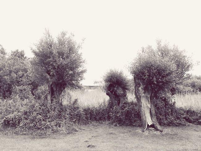 Prignitz, Müritz Nature Outdoors Landscape Tree Tranquility Beauty In Nature Summer Müritz Prignitz Baum Schwarzweiß Weide Wegesrand EyeEmNewHere Investing In Quality Of Life