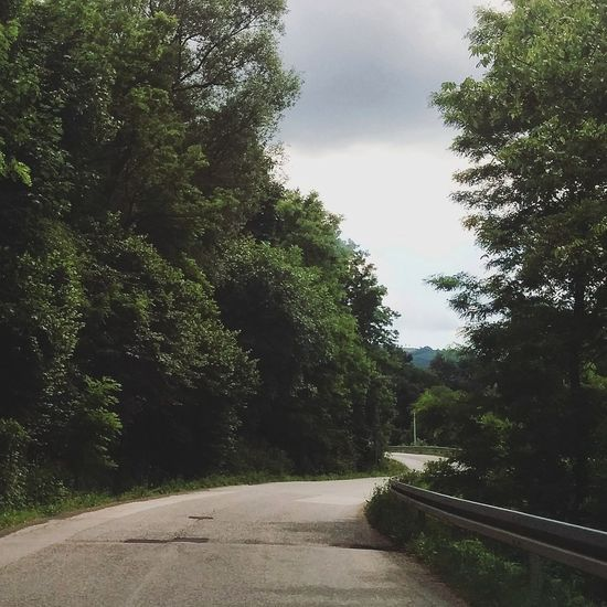 Nature Driving Jungle Road Wild Wildlife Street Spring Blog Blogger EyeEm Nature Lover Curves Curved Road Wandering Green Greenery Landscape Greenery Scenery The Secret Spaces Live For The Story The Great Outdoors - 2017 EyeEm Awards