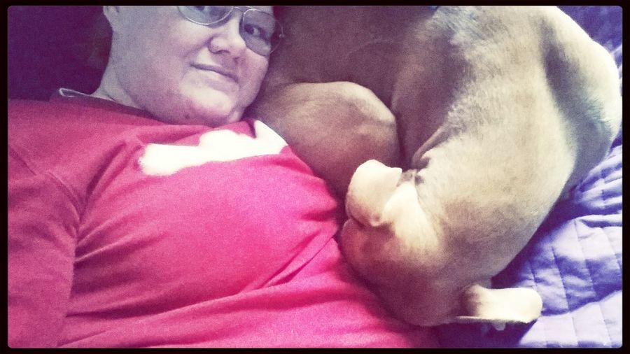 Dog Relaxing Dogpets Enjoying Life