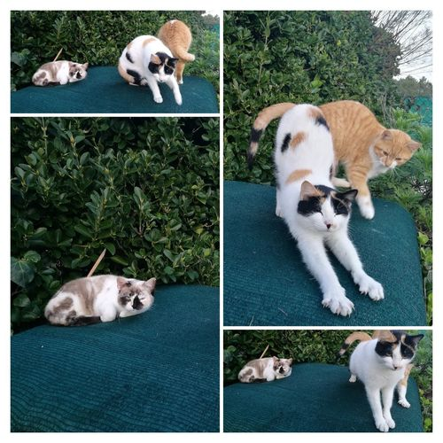 Pets Beagle