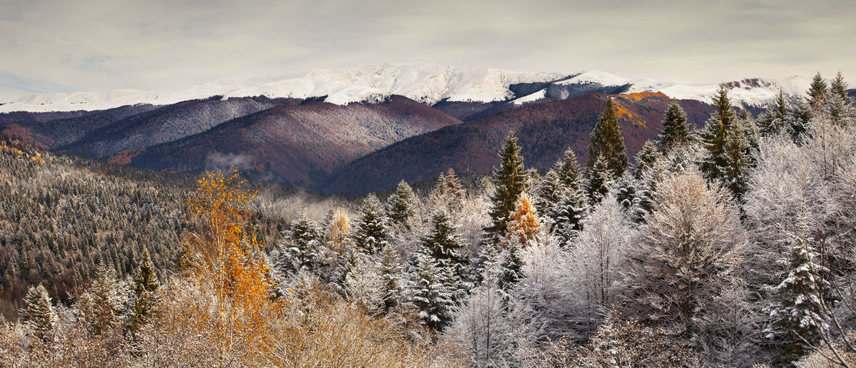 Winter landscapes from Rodnei Mountains, Romania. Autumn Frozen Ice National Park Nature Panorama Panoramic View Tree Winter Wintertime Beauty In Nature Cold Temperature Fall Forest Landscape Mountain Outdoor Scenics Season  Sky Snow Snowcapped Mountain White