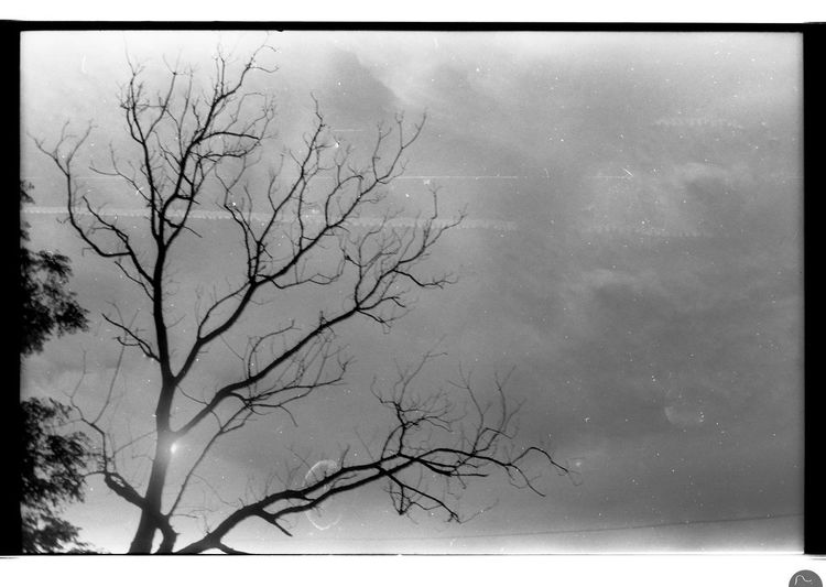 400TX Backlight And Shadows Backlighting Black & White Film Film Photography Kodak Minolta Minolta Xg1 Silhouette Tree Silhouette