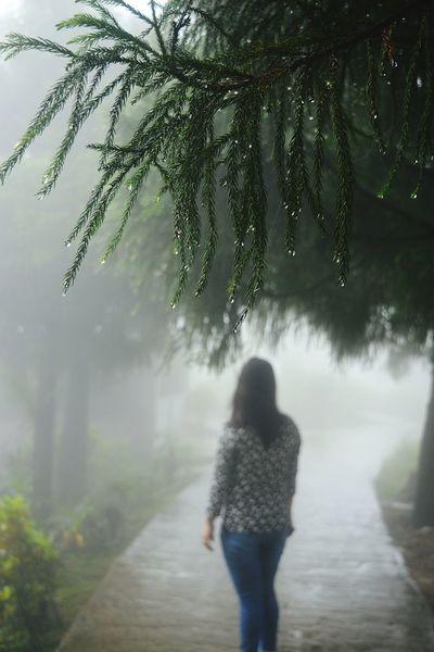 Fog Morning Scenics Rural Scene Outdoors Tree