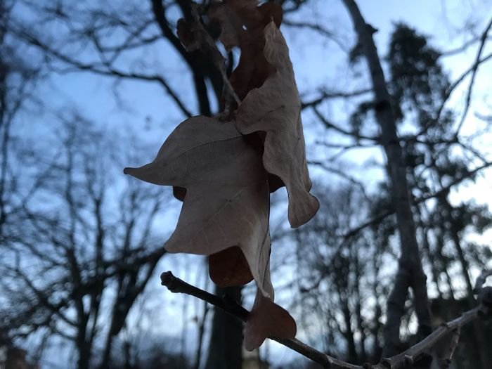 Tree Low Angle View Plant Nature No People Representation Day Branch Focus On Foreground Bare Tree Creativity Sky Outdoors Toy Art And Craft Human Representation Craft Wood - Material