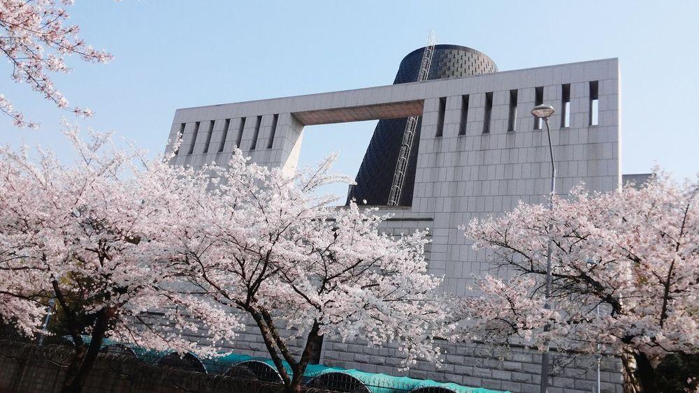 Sakura Korea Seoul