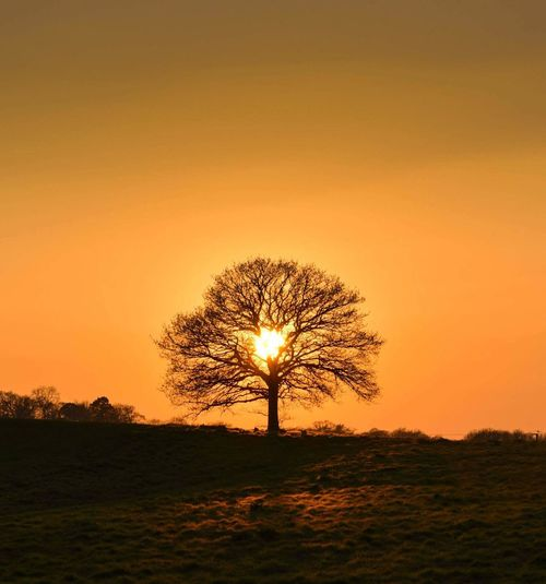 Sunset Single