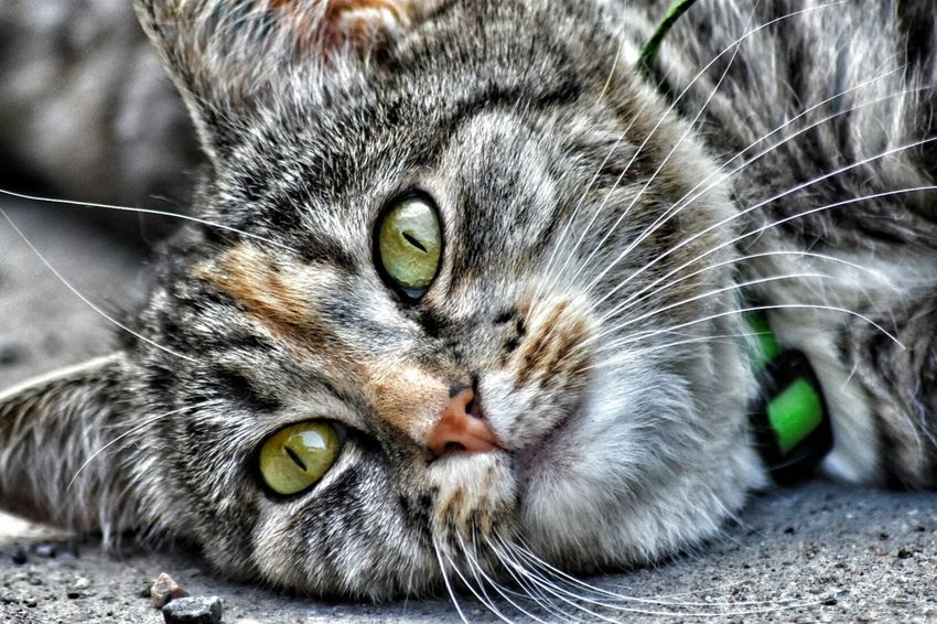 Hello World 😊 Cat♡ Enjoying Life Taking Photos Relaxing Nature. ☺ That's Me 😉