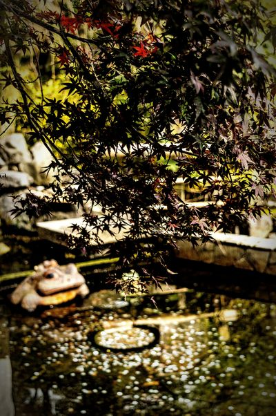 No People Park Garden Pond Leaves Autumn Frog Statue Coins Coins In A Fountain Wish Tenryuji Tenryuu-ji Temple Tenryuu-ji