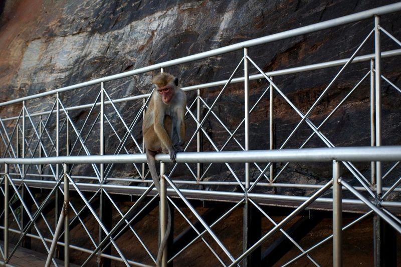 Scaffolding Gantry Bridge Rock Mountain Rock - Object View Wildlife & Nature Monkey Ape Primate Sitting Contemplating Metal Framework Animals In The Wild EyeEm Selects Built Structure Rugged Geology Eroded Rock Formation Cage