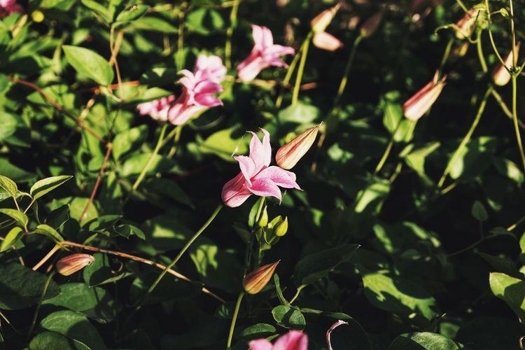 Nature Sunset Golden Hour Flower Head Flower Leaf Pink Color Botanical Garden Summer Close-up Plant In Bloom Blooming