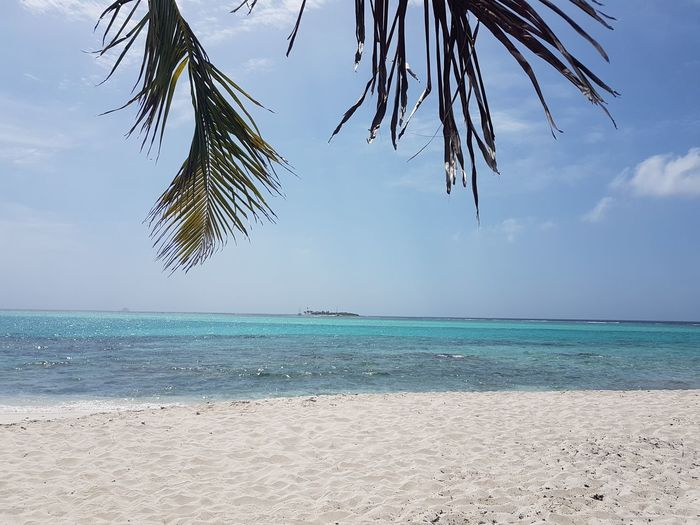 Sea Beach Water Tree Sand Tropical Climate Blue Horizon Over Water Vacations Nature Outdoors Travel Destinations Landscape Tranquility Sky Beauty In Nature Day Summer No People Palm Tree Tobago Cays Tobago Tobago & Grenadines