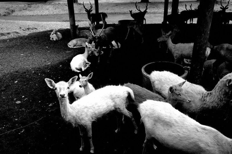 Deer Animal Zoo
