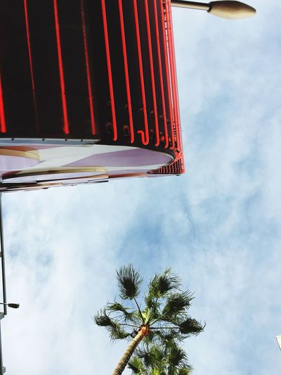 EyeEmNewHere Low Angle View Day Sky Outdoors Built Structure Universal Studios  Palm Tree Summer Views Good Times Relaxing Moments Beauty In Nature The Good Life