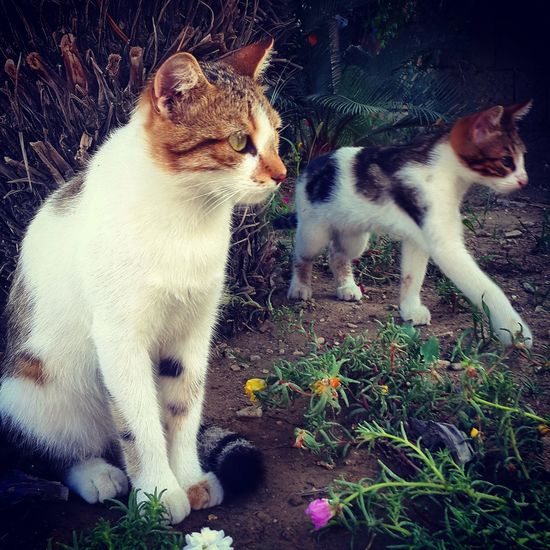 Love Cats Cat Lovers Animals Cat♡