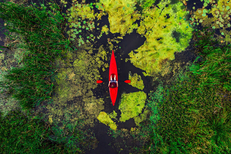 High angle view of red leaf amidst trees in forest