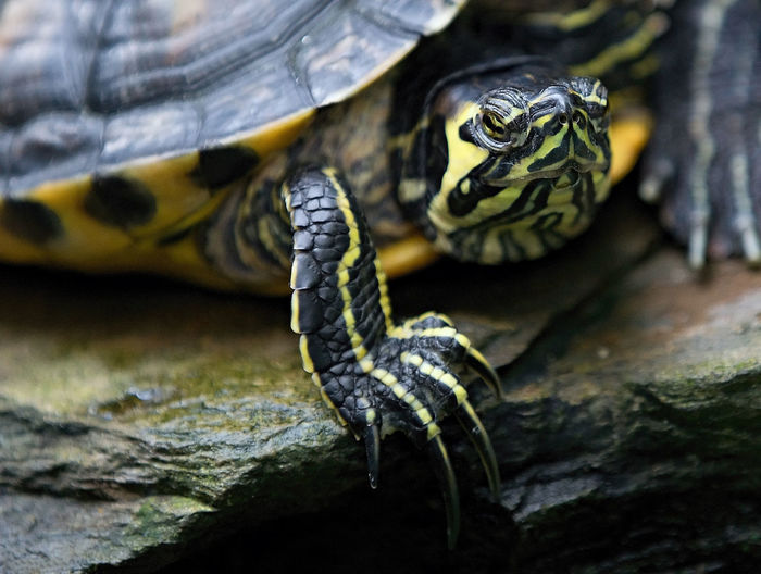 Animal Themes Animal Wildlife Animal Reptile Animals In The Wild Vertebrate One Animal Close-up No People Animal Body Part Turtle Focus On Foreground Nature Day Outdoors Snake Animal Markings Zoo Tree Zoology Animal Head  Animal Scale Poisonous