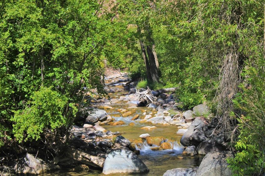 Tree Water Plant Rock Solid Forest Rock - Object Nature Land Beauty In Nature Scenics - Nature Day Growth Non-urban Scene Green Color Flowing Water River Tranquility Motion Stream - Flowing Water No People Flowing Outdoors WoodLand