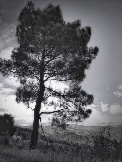 Bnw_A ❤️ For Tree's Bnw_friday_eyeemchallenge Streetphoto_bw Tree Plant Sky Beauty In Nature Tranquility Nature Tranquil Scene
