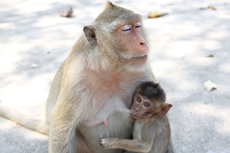 Animal Family Animal Themes Animal Wildlife Animals In The Wild Care Close-up Cold Temperature Day Mammal Monkey Nature No People Outdoors Sitting Snow Togetherness Winter Young Animal