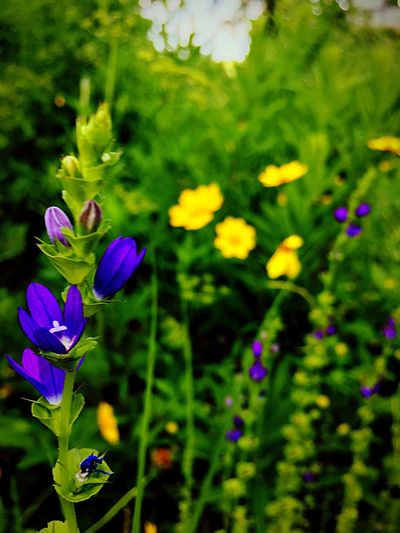 Shaw Nature Reserve Missouri Native Flower Fragility Growth Plant Beauty In Nature Nature Freshness Petal Purple Focus On Foreground Flower Head No People Day Green Color Blooming Outdoors Close-up Purple Flower Yellow Flower