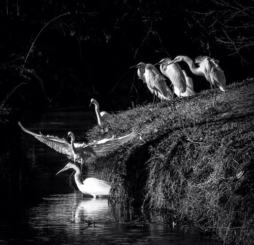 Happy Hour Thursday Tadaa Community EyeEm_crew Black & White White Rock Lake My Best Photo 2015