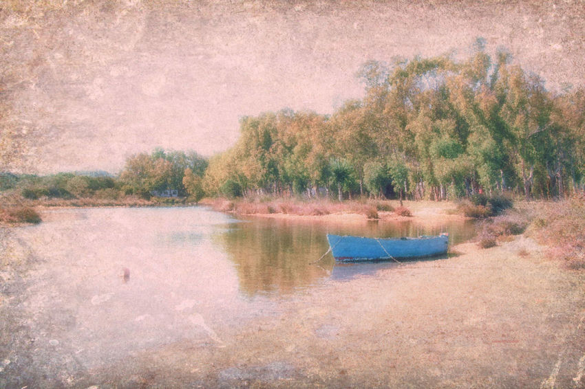 Come una pittura Beauty In Nature Lake Nature Nautical Vessel Scenics Tranquility Tree Water
