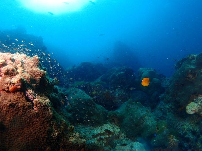 Underwater Scuba Diving Water Sea Life Fish
