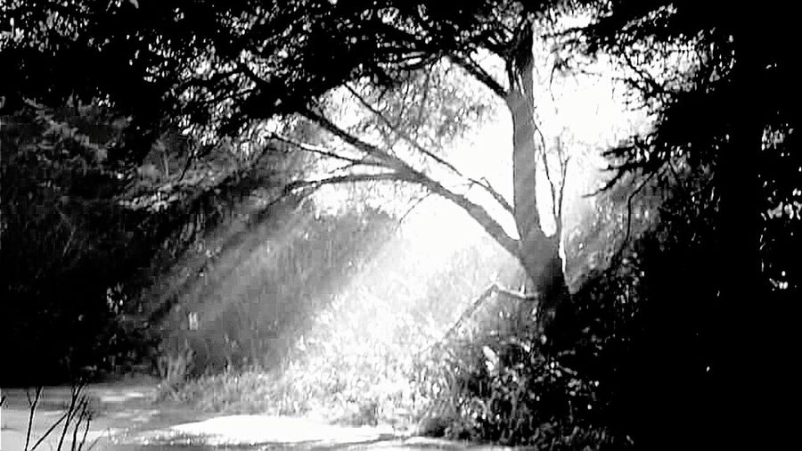 Tree Nature Sunlight Beauty In Nature Sunset Sunbeam Sun Plant Growth Scenics No People Tranquil Scene Outdoors Sky Grass Day Water Landscape Black And White Photography The Weekend On EyeEm Best Pictures Grass Area Trees And Nature Low Angle View Unconditional