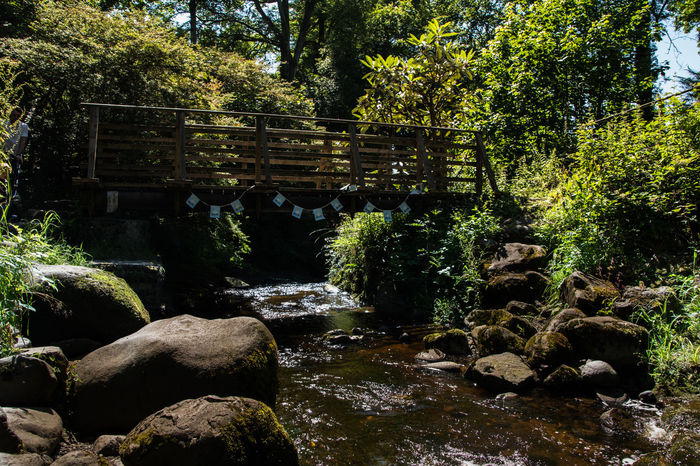 Under the bridge Outdoors Tree Water Sunlight Shadow Nature No People Day Beauty In Nature Scotland