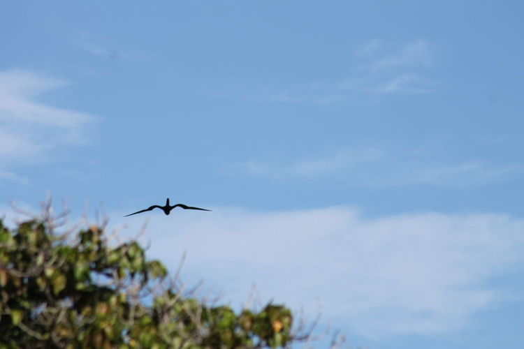 Flying Cloud - Sky Nature No People Bird Photography Bird In Flight Charlestown Nevis Caribbean Perspectives On Nature