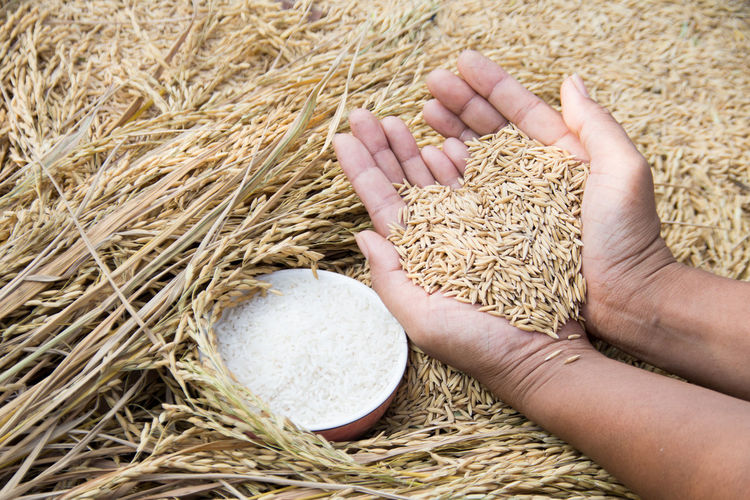 High Angle View Of Hands Holding Grain
