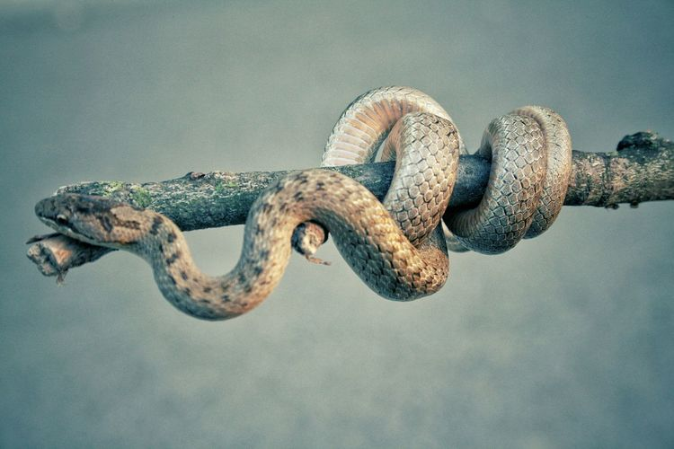 Close-Up Of Snake Coiled On Stick