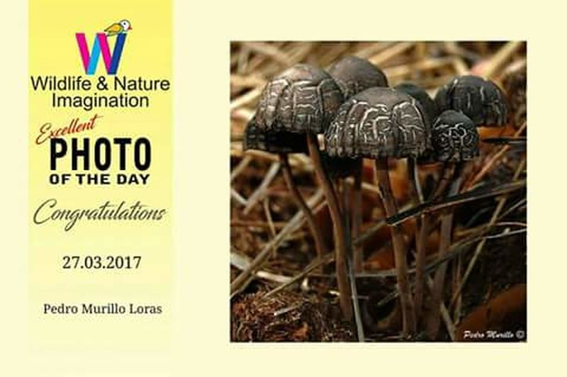 Photoday:) Bestphoto Bestphotography Happy Photoday Nature Photography Nikonespaña Catalunya Martorell Nikonphotographer Nature Photograhy Nature Photographer Nature Nikonphotograhy Naturephotography NikonD60 Mushrooms 🍄🍄 Mushroomphotography Hongos  Eyem Nature Lover Eyeemphotography Reconocimiento Setas Seta Fongs