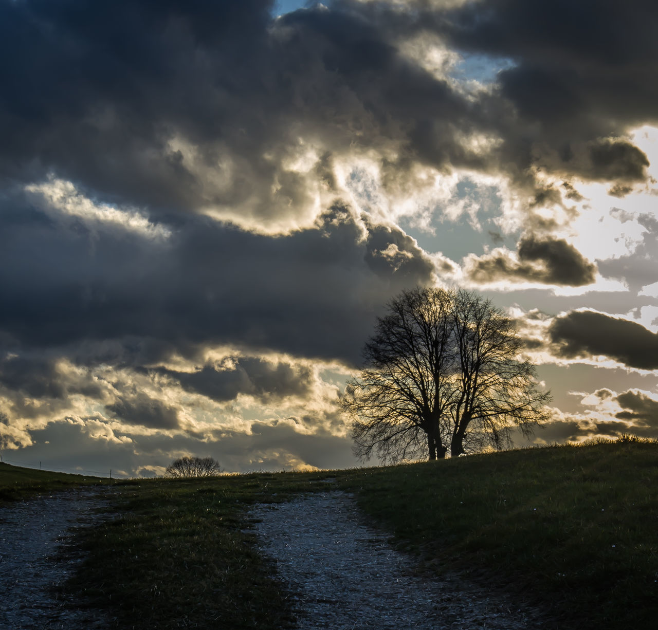 tree, beauty in nature, nature, cloud - sky, tranquility, tranquil scene, sky, scenics, no people, outdoors, bare tree, landscape, water, day, grass