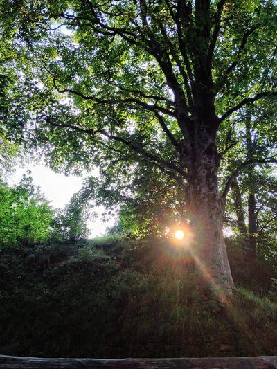 Sundowntrees Sundown Königfeld Beautiful Nature