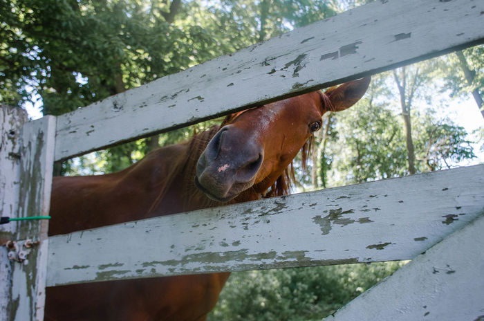 Horses Animal Animal Body Part Animal Head  Animal Themes Animal Wildlife Brown Day Domestic Domestic Animals Focus On Foreground Horse Livestock Low Angle View Mammal Nature No People One Animal Outdoors Pets Plant Tree Vertebrate