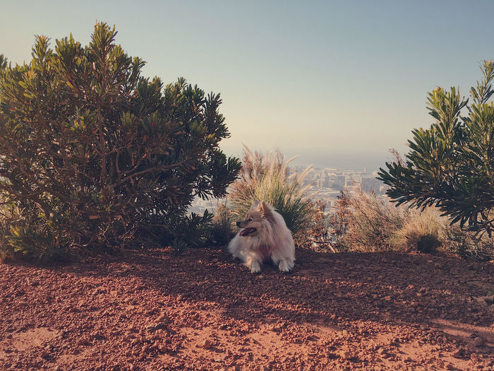 Pet Portraits Animal Themes Beauty In Nature Clear Sky Day Dog Domestic Animals Full Length Mammal Nature No People One Animal Outdoors Pets Sky Tree