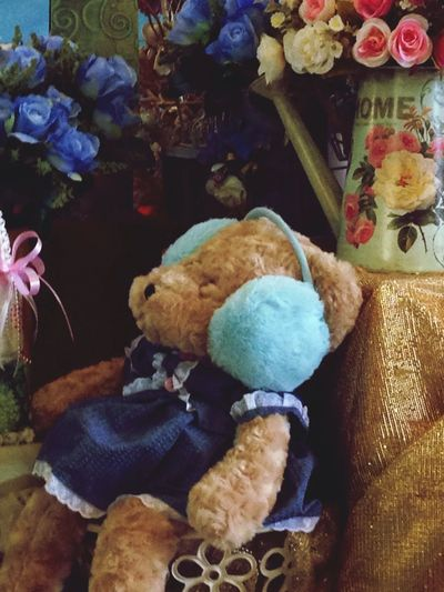 Good Night ♡♡ Teddy Bear Bear Dolls