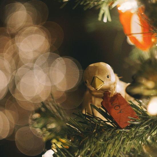 Joy. Festive Season Christmas Tree Bokeh