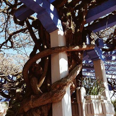 Igerslugo Lugo Espa ña Tree árbol igerslugo
