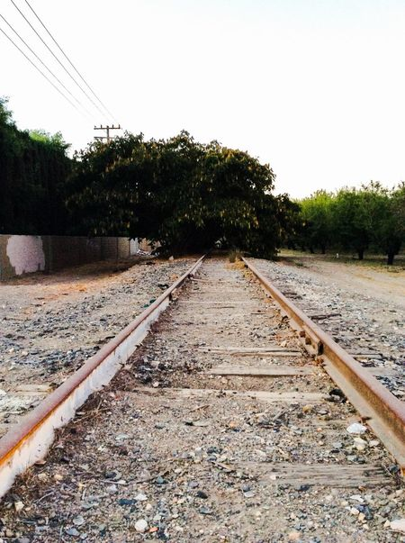 Railroad Track Rail Transportation Tree No People Day Nature Outdoors